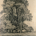Elm Trees In Old Hall Park by John Constable