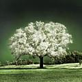 Emerald Meadow Square by Hugo Cruz