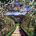 English Rose Trellis by David Lloyd Glover