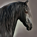 Equus by Corey Ford