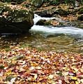 Fall Color Rushing Stream by Thomas R Fletcher
