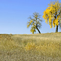 Fall Days In Fort Collins Co by James Steele