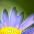 Fall Flower by Silke Magino