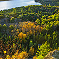 Fall Forest And Lake Top View by Elena Elisseeva