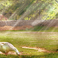 Farm - Geese -  Birds Of A Feather - Panorama by Mike Savad