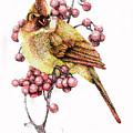 Female Cardinal by Preston Shupp