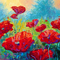 Field Of Red Poppies by Marion Rose