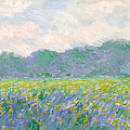 Field Of Yellow Irises At Giverny by Claude Monet