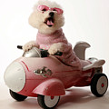 Fifi Is Ready For Take Off In Her Rocket Car by Michael Ledray