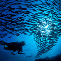 Fiji, Galapagos Islands by Dave Fleetham - Printscapes