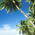 Fiji, Vanua Levu Print by Peter Stone - Printscapes