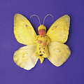 Fiona Butterfly by Anne Geddes