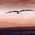 Flight by Holly Kempe