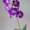 Floral by Tom Prendergast