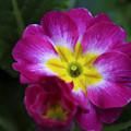 Flower In Spring by Deborah Benoit