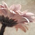 Flower Poetry by VIAINA Visual Artist