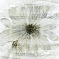 Flower Reflection by Frank Tschakert