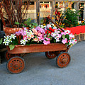 Flower Wagon by Perry Webster