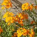 Flowers Orange 2 by Warren Thompson
