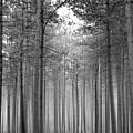 Foggy Forest by Svetlana Sewell