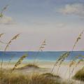 Folly Beach by Cindy Davis