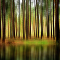Forest Abstract by Svetlana Sewell