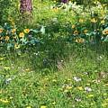 Forest Flowers Landscape by Carol Groenen
