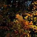 Fox Squirrel by Noah Cole