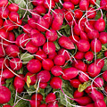 Fresh Red Radishes by John Trax