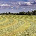 Freshly Mown Hay  by John Trax