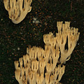 Fungi Grows Out Of A Fallen Log In An by Michael S. Quinton