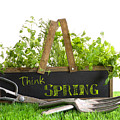 Garden Box With Assortment Of Herbs And Tools by Sandra Cunningham