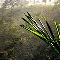 Garden of Eden Rain Print by KAREN WILES