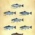 Genus Oncorhynchus by Logan Parsons