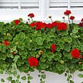 Geraniums On Window by Elena Elisseeva
