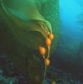 Giant Kelp by Georgette Douwma