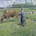 Girl Tending A Cow In Pasture by Camille Pissarro