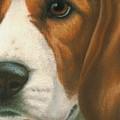 Goggie Beagle by Karen Coombes