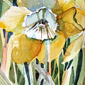 Golden Daffodil by Mindy Newman