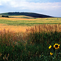 Golden Fields Forever by Kathy Yates