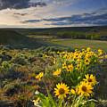 Golden Hills by Mike  Dawson