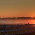 Golden Morning by Robert Pearson