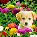 Golden Puppy In The Zinnias by Bob Nolin