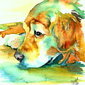 Golden Retriever Profile by Christy  Freeman