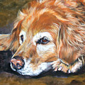 Golden Retriever Senior by Lee Ann Shepard