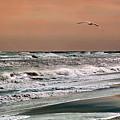 Golden Shore by Steve Karol