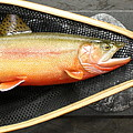 Golden Trout River Slice by Eric Knowlton