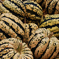 Gourds In White And Green by Jame Hayes