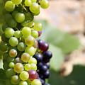 Grapes by Jane Rix