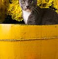 Gray Kitten In Yellow Bucket by Garry Gay
